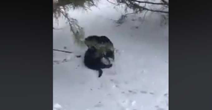 Cat was abandoned and freezing in snow when an amazing dog came along and saved its life