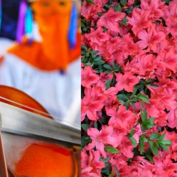 Imperdible Feria de las Flores Huauchinango 2020