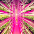 Conoce la granja bajo techo más grande y ecológica del mundo