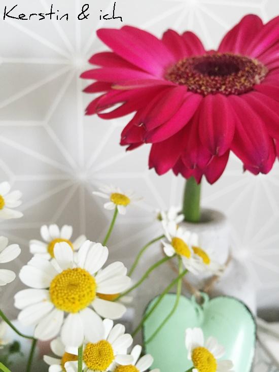 Blumen Kamille