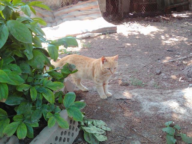 Rijko Cat