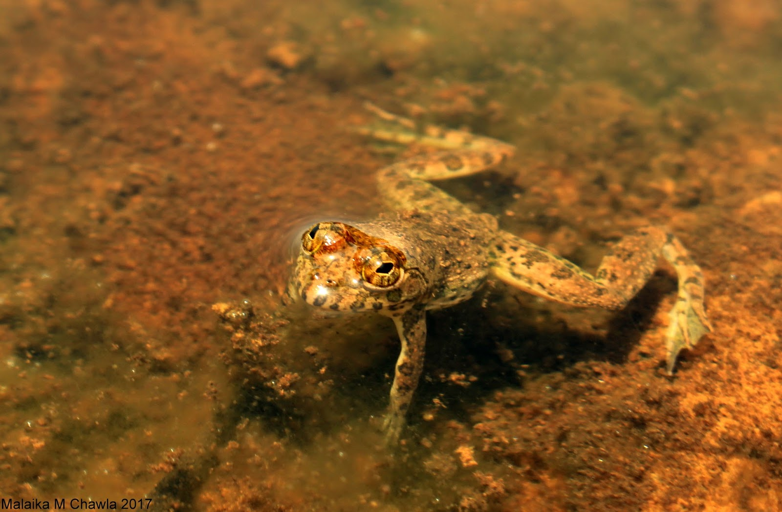 Travelling Lens: Crocodile Survey, Otter Scat and a Five ... - photo#33