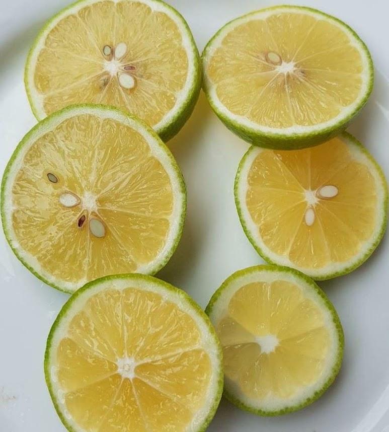 bibit lemon jumbo California okulasi bisa di tabulampot kan Batam