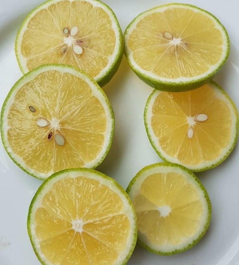 bibit lemon jumbo California okulasi bisa di tabulampot kan Jawa Timur
