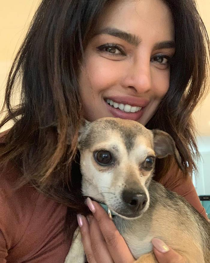 Priyanka Chopra  | Instagram accounts of 15 celebrities' pets