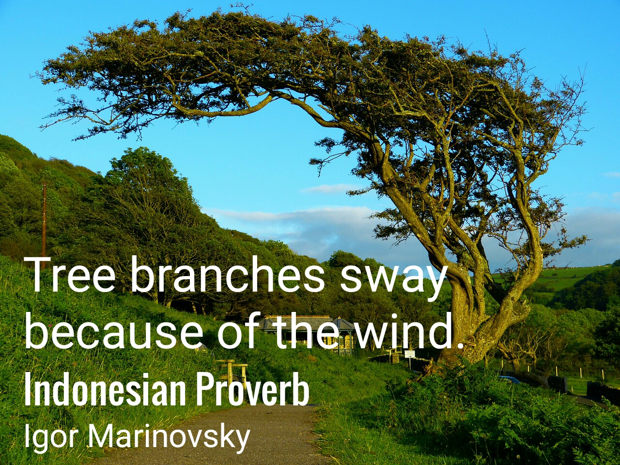 Tree branches sway Because of the wind.
