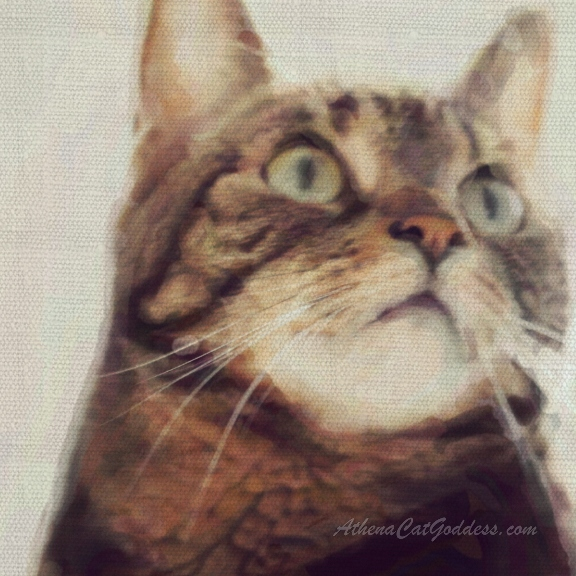 tabby cat water colour art