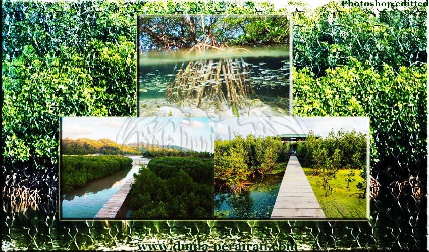 Fungsi dan Manfaat Penting Adanya Hutan Mangrove Pada Kawasan Pesisir - Biota Dunia Perairan
