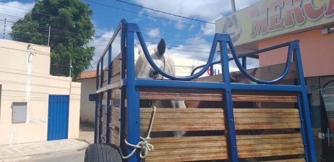 Sorteia-se uma égua de vaquejada avaliada em R$ 5 mil, em prol da reconstrução da igreja matriz do Sagrado Coração de Jesus