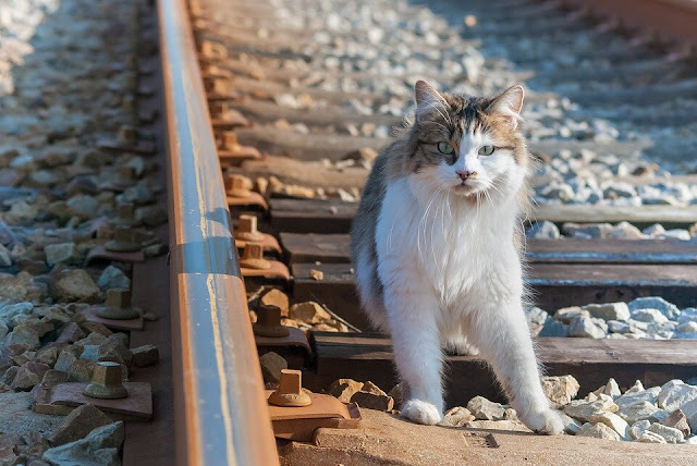 На протяжении 6 лет кот искал дорогу домой к своим хозяевам