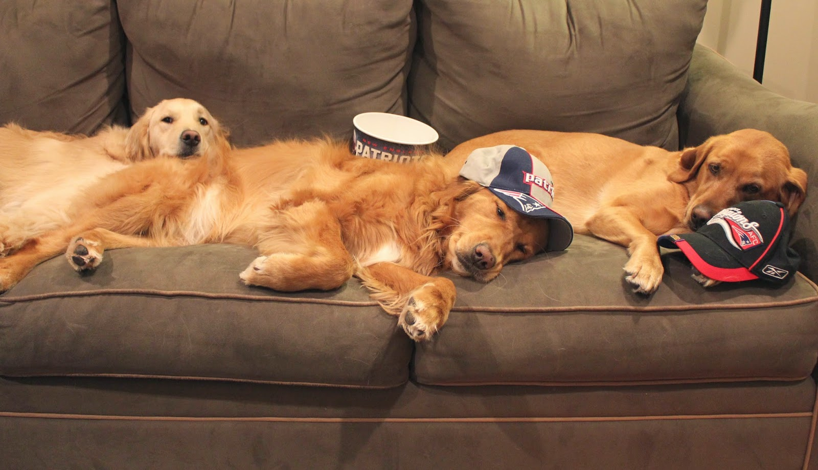 dogs recovering on couch after Super Bowl