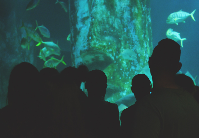 Aquarium crowd