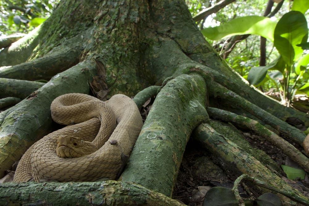 lha da Queimada Grande (Snake Island), Brazil