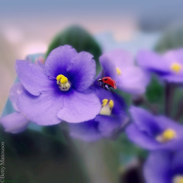 flora and ladybug