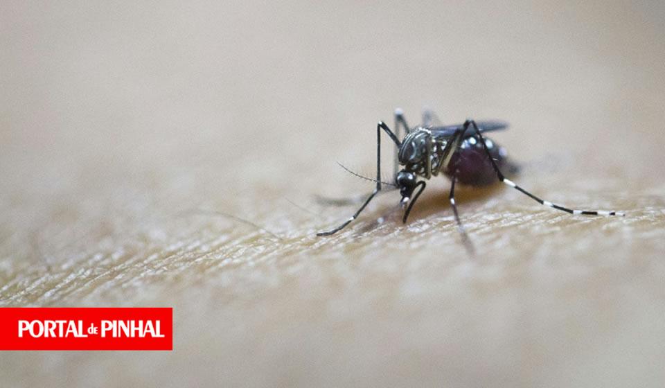 Secretaria Estadual de Saúde alerta que vírus da dengue mais grave circula em Pinhal