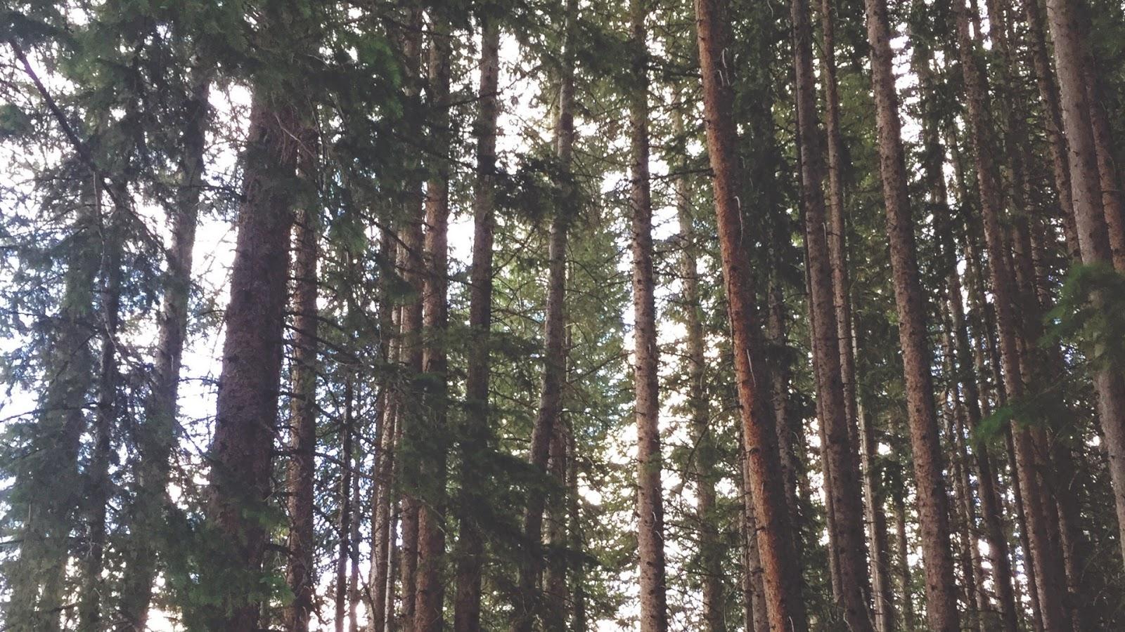 Forest Desktop Wallpaper Downloads // www.thejoyblog.net