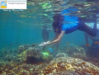 spot snorkeling alami kelagian lunik