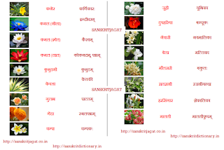 flowers_name_in_sanskrit