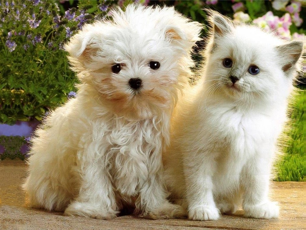 funny puppies and kittens - photo #1