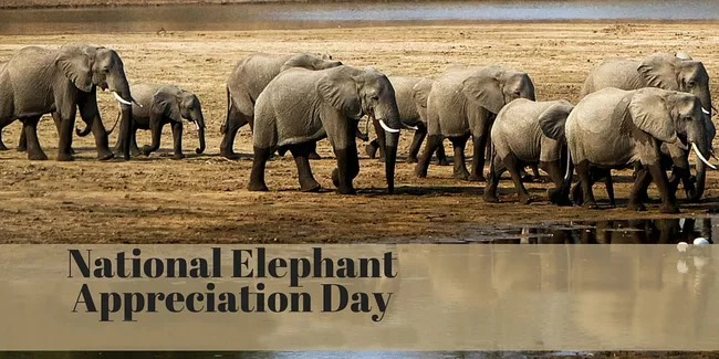 National Elephant Appreciation Day Wishes Sweet Images