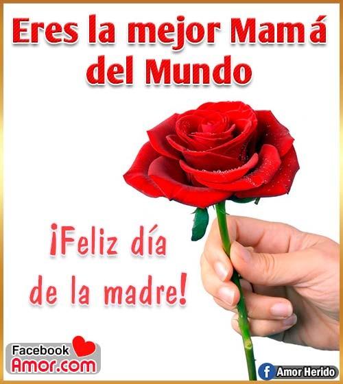 rosa roja para mamá