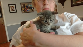 5 week old kitten with a fractured tail in my arms at the vet