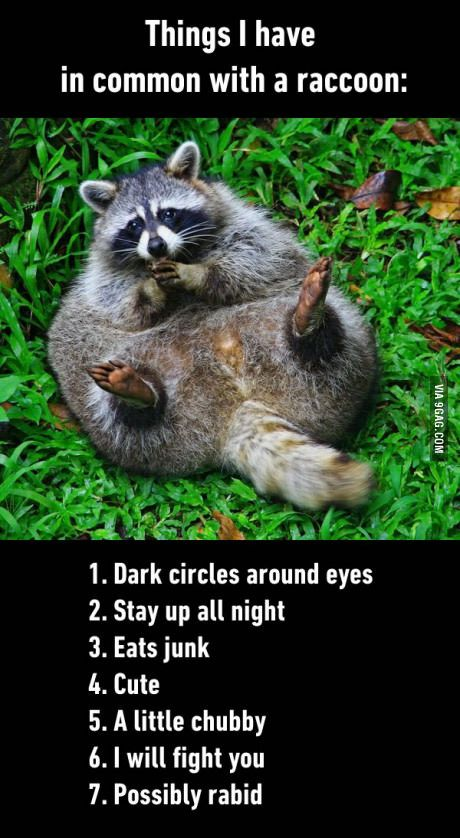 Funny Things In Common With A Raccoon Joke Picture