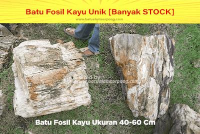 batu fosil kayu hitam