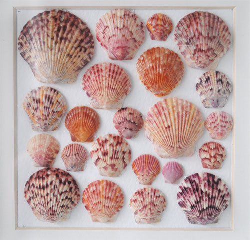 coastal art framed shells
