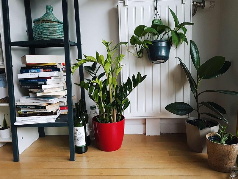 PASSION: MES PLANTES VERTES