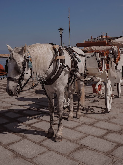 white horse and carriage in greece