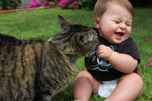 Baby and animals 6