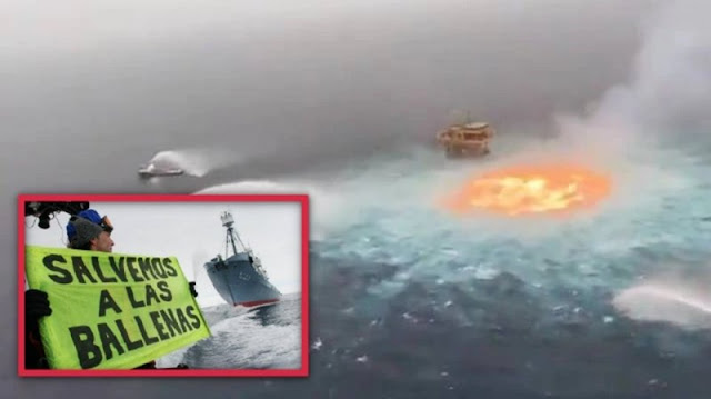 Greenpeace Tunde al gobierno de AMLO; Acusa que ojo de fuego de PEMEX mató a delfines y tiburones