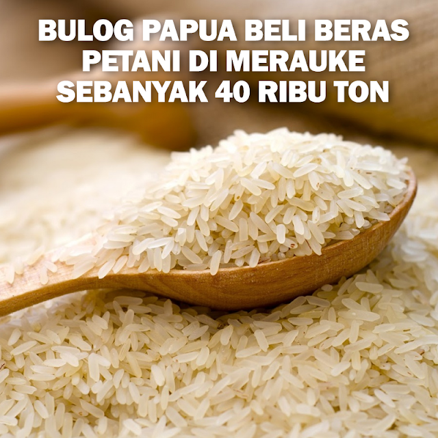 Bulog Papua beli beras petani di Merauke sebanyak 40 .645 ton