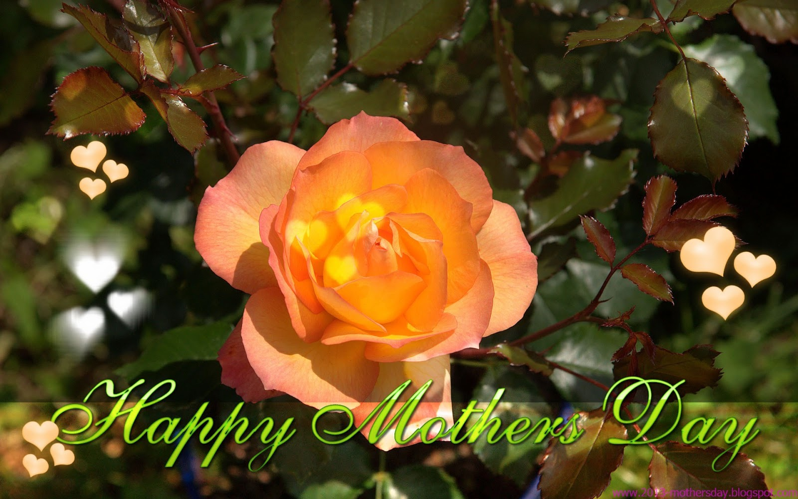 Wallpaper Free Download: Mothers Day 2013 Desktop HD