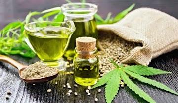 Cannabis medicinal, uma cura para todos os males de saúde