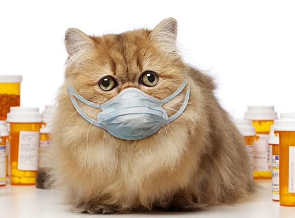 Животные и коронавирус