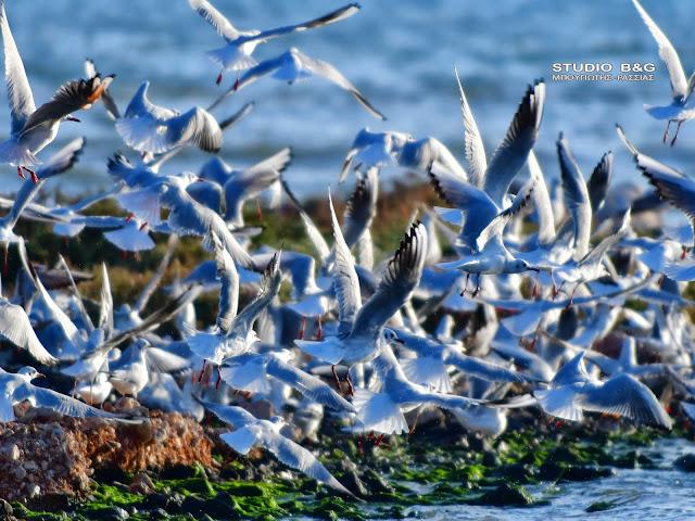 Η φωτογραφία της ημέρας: Τα γλαροπούλια