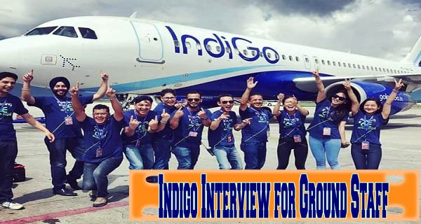 Indigo career