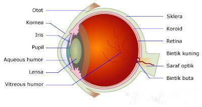 Macam Alat Optik Beserta makna dan Fungsinya Macam Alat Optik Beserta makna dan Fungsinya