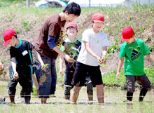 カブトエビ農法米作り 田の草取り虫