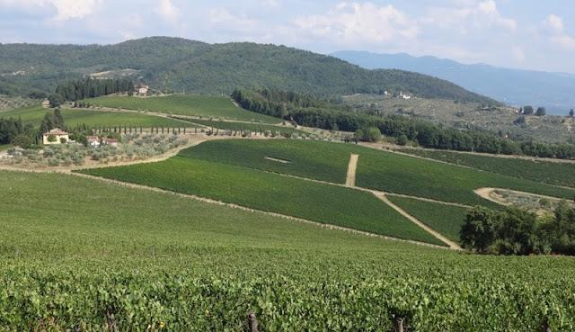 Plantação da vinícola Marchesi Frescobaldi