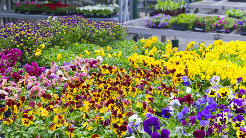 The 10 Fastest-Growing Annuals From Seed