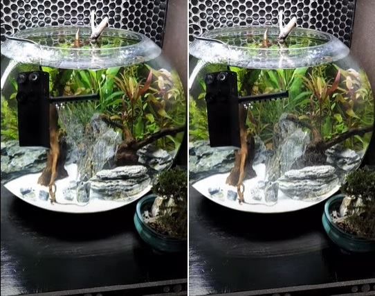 Testing powerhead filter in the fish bowl