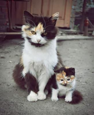 Koleksi Gambar Comel Haiwan Ibu dan Anak