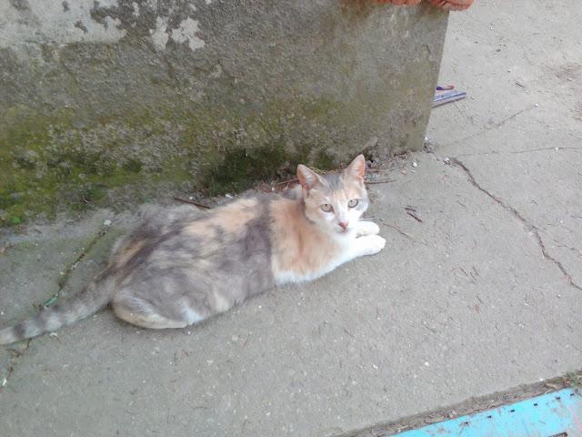 Plashla Cat