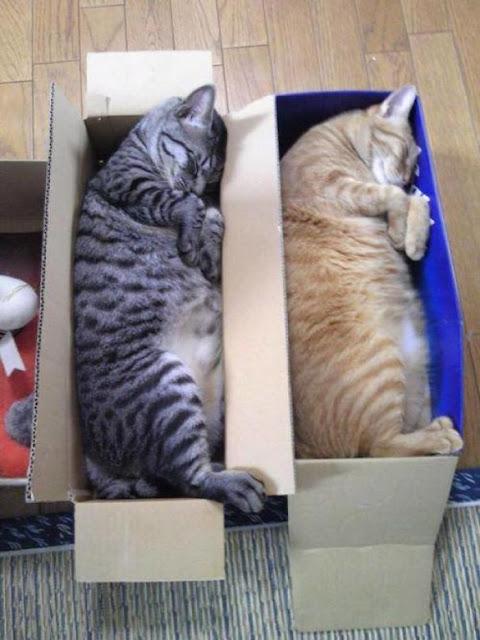 kucing tidur lucu