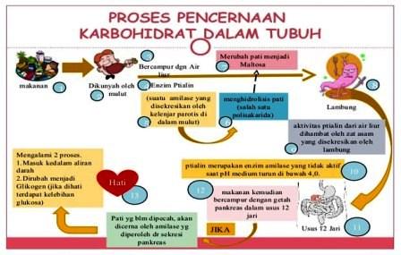 Proses Pencernaan Karbohidrat dalam Tubuh Manusia