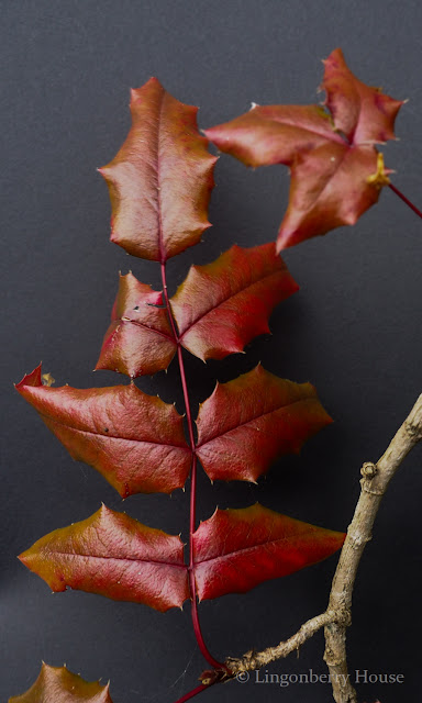 lingonberryhouse, kodin kuvalehti, mitä on rakkaus, ystävä jolla on taikavoimia, syksy, autumn, kukka, puutarha, garden