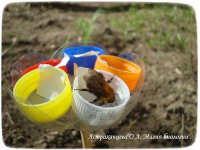 кормушка для насекомых, цветок-ромашка, сироп, шмель